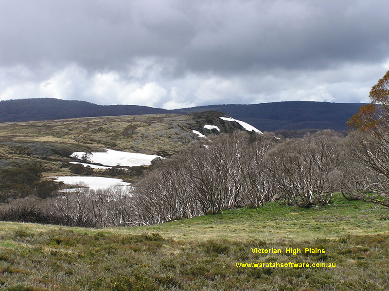 Wallace's Hut & Snow Gum pb080093 image